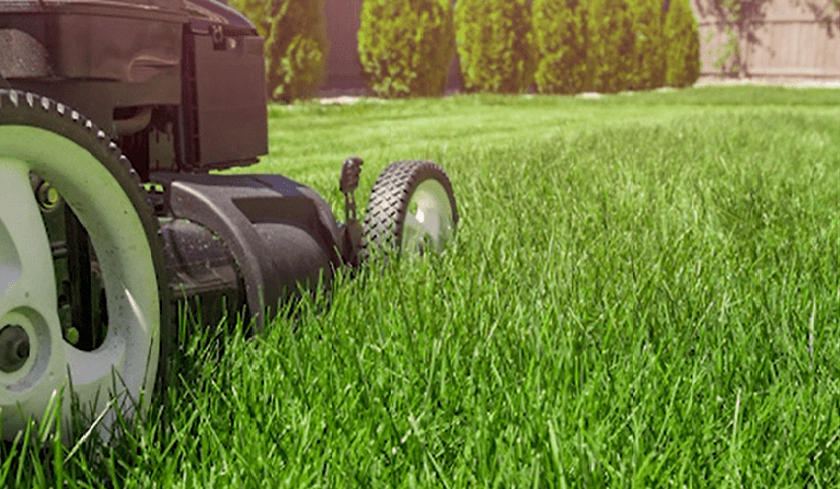 Get Your Lawn in Summer-Ready Shape
