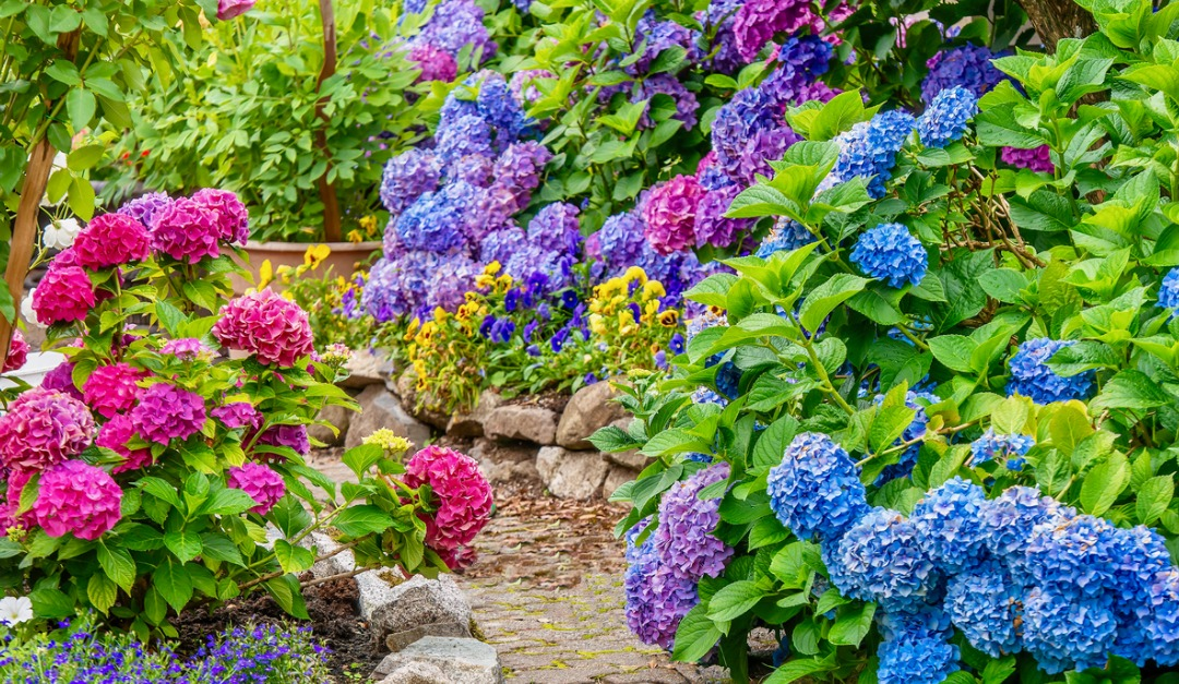 Beautiful Plants for Added Curb Appeal This Spring