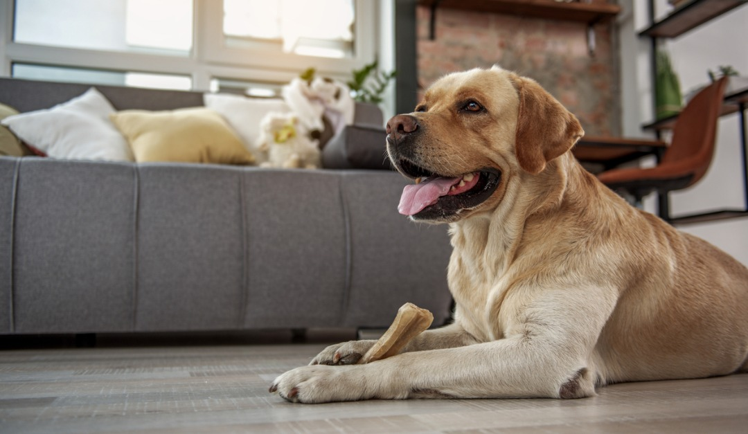 4 Luxury Floors for Dog Owners